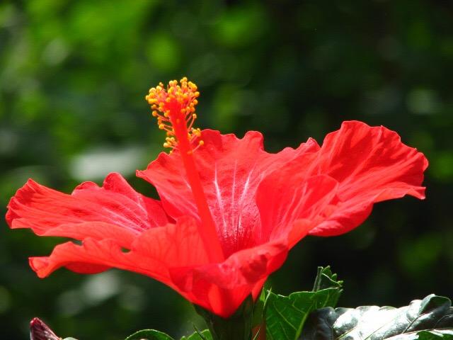 De Kleur Rood : Rood de kleur vanu u kardonsch